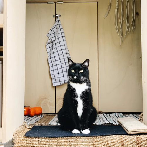 Roammates chat vanlife