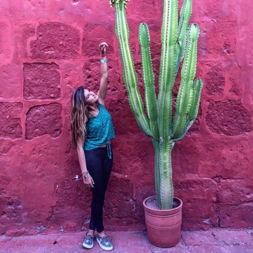 Meloutrip Cactus